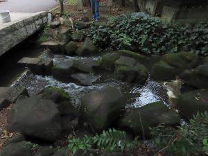 2019年10月11日の水門橋堰